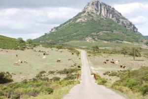 Tierhaltung auf Sardinien